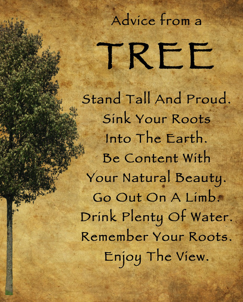 5 Minute Inspiration &#8211; Advice from a Tree